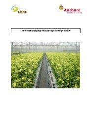 Phalaenopsis potplanten - Anthura