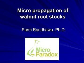 Micropropagation of Walnut Rootstocks