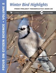 Winter Bird Highlights 2006 - Cornell Lab of Ornithology