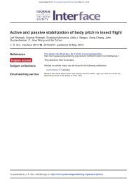 Active and passive stabilization of body pitch in ... - Itai Cohen Group
