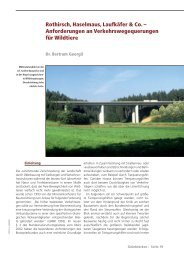 Rothirsch - Landesjagdverband Bayern
