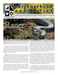 Download the summer issue - Neighborhood Naturalist