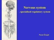 Obecné principy stavby nervového systému Přehled míšních nervů
