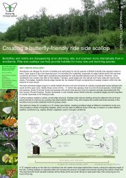 Download pdf - Butterfly Conservation Warwickshire
