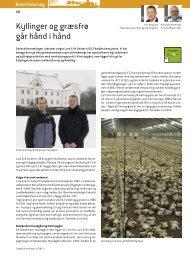 Kyllinger og græsfrø går hånd i hånd - DLF-TRIFOLIUM Denmark