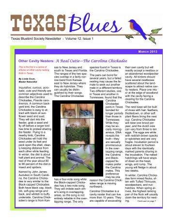 Other Cavity Nesters: A Real Cutie—The Carolina Chickadee