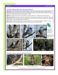Other Cavity Nesters: A Real Cutie—The Carolina Chickadee - Page 4