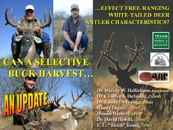 Can a Selective Buck Harvest Effect Free-ranging White-tailed Deer ...