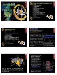 Histologie II + -