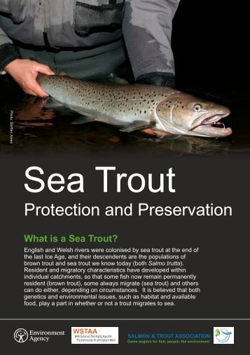 Sea Trout Protection and Preservation - Get Hooked!