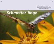 Schmetter linge - Grüne Liga Osterzgebirge