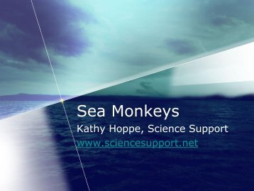 What are Sea Monkeys, really? Brine shrimp