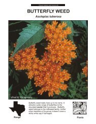 BUTTERFLY WEED - The State of Water