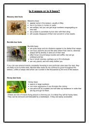 have a look at this bee factsheet and see what best describes your ...
