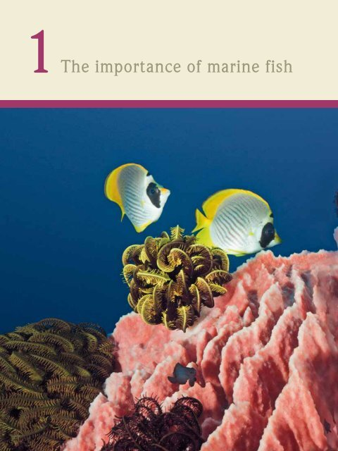 The importance of marine fish - World Ocean Review