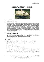 Budidaya kelinci - Warintek