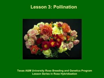 Lesson 3: Pollination - Aggie Horticulture - Texas A&M University