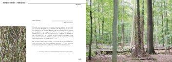 Wolfgang Buntrock / Frank Nordiek ZWEI BÄUME