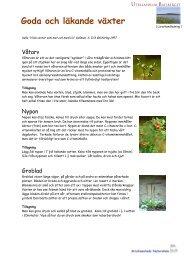 Goda och läkande växter - några enkla recept! - Buf