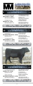 the bar double m bull sale! - Page 7