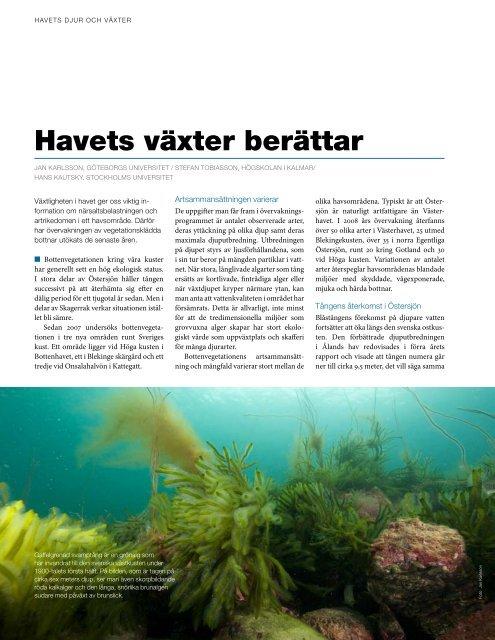 Havets växter berättar - Havet.nu
