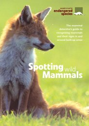 spotting wild mammals - People's Trust for Endangered Species