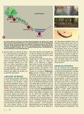 Wenn der Wald zum Ozean wird – - Scinexx - Seite 2