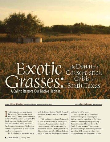 Exotic Grasses - Caesar Kleberg Wildlife Research Institute