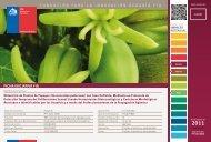 Obtención de Plantas de Papayos (Vasconcellea pubescens) - Fia