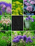 Alluring Alliums: Astonishing Plants for the ... - Seasonal Wisdom - Page 2