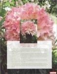 Beautiful Gardens - Outreach & International Affairs - Virginia Tech - Page 5