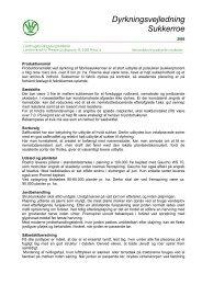 Dyrkningsvejledning Sukkerroe - LandbrugsInfo
