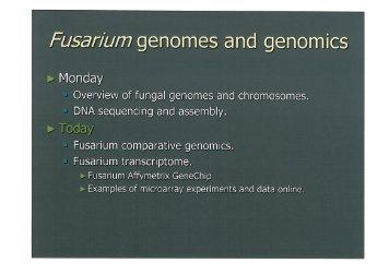 Fusarium genomes and genomics (CK)