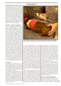 Doggy Rapport 3 - 2012 - Doggy Professional - Page 5