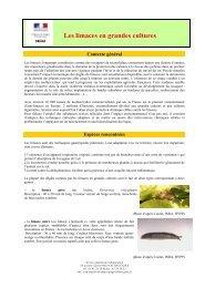 Les limaces en grandes cultures - DRIAAF Ile-de-France