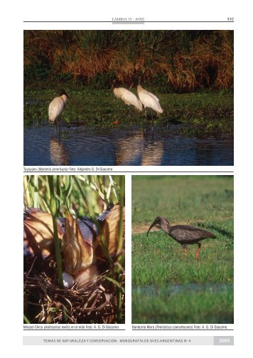 libro bagual completo IMPRENTA.pmd - Aves Argentinas