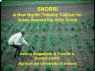 SNORRI A new Nordic timothy cultivar for areas around the Artic circle
