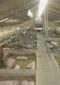 Arbejdsmiljø ved håndtering af svin - BAR - jord til bord. - Page 5