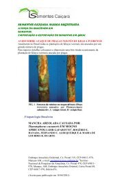 Mogno Africano Khaya Ivorensis - Sementes Caiçara