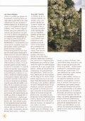 Margaritas de la nuboselva en el Arboretum Strybing - Page 3