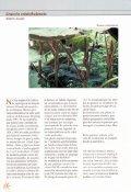 Margaritas de la nuboselva en el Arboretum Strybing - Page 5