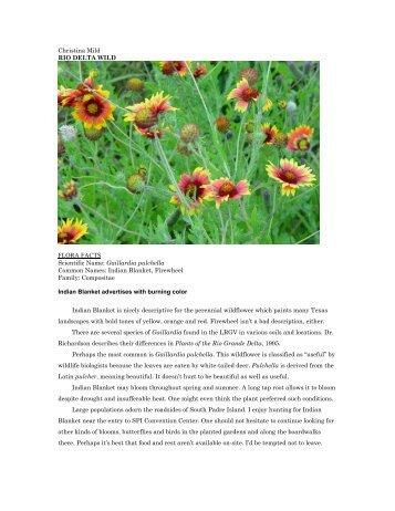 "Gaillardia sp.pdf - Christina Mild's ""Rio Delta Wild"""
