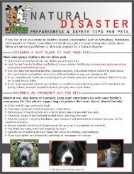 Natural disaster preps - Bark Busters Home Dog Training