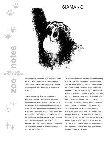 Siamang - Zoos South Australia