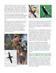 global warming threatens many bird species - American Bird ... - Page 2