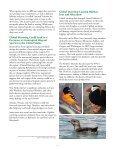 global warming threatens many bird species - American Bird ... - Page 3