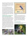 global warming threatens many bird species - American Bird ... - Page 4