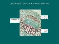 4- Translocación