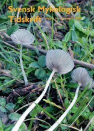 nummer 2 · 2007 - Sveriges Mykologiska Förening