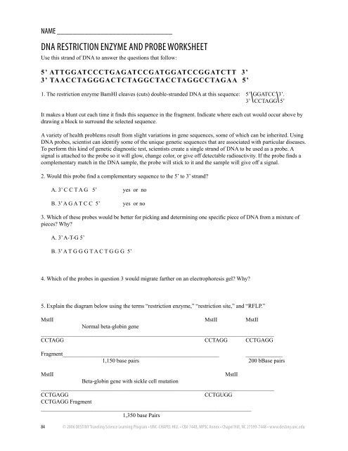DNA Restriction Enzyme and Probe Worksheet (pdf file) - Morehead ...